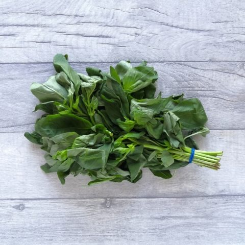basil bunch of fresh herb with blue elastic band on grey background