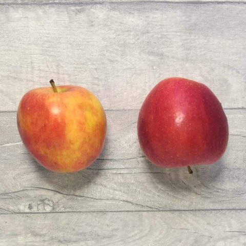 two breaburn apples on grey background