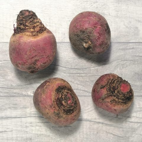 four candy beetroot bulbs on grey background