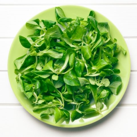 fresh lambs lettuce on green plate and white background