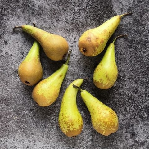 conference pears on black background
