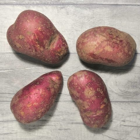four baking rooster potatoes on grey background