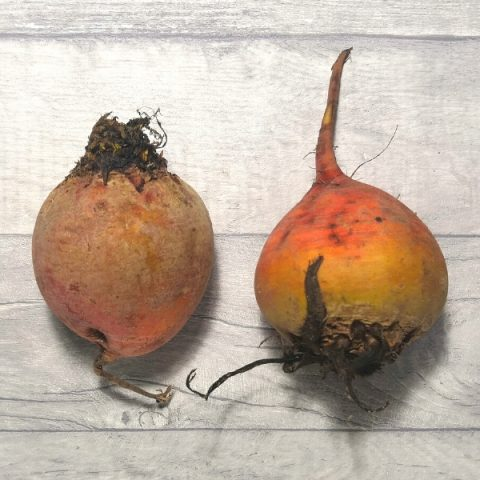 two golden beetroot on grey background