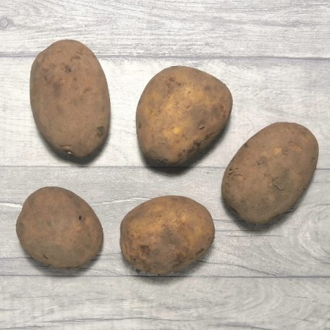 dirty maris piper potatoes on grey background