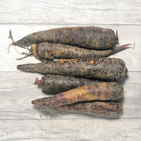bunch of purple carrots on grey background