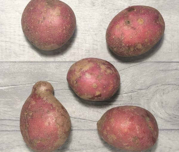 five rooster potatoes on grey background