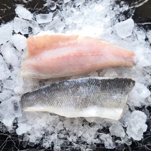 two seabass fillets with skin on ice