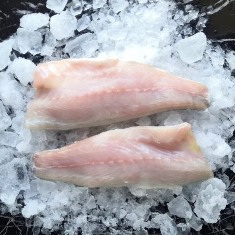 two seabass fillets on ice with skin down